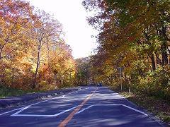 大沼湖畔周辺道路の紅葉