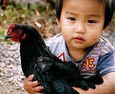 とりのす牧場の黒い鶏「ネラ」