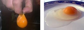 ネラの良質な卵