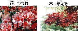 北広島市の花・木